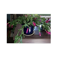 Christmas Cactus Rectangle Magnet