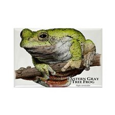 Eastern Gray Tree Frog Rectangle Magnet