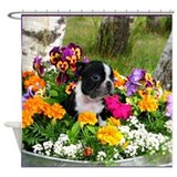 Boston terriers Shower Curtains