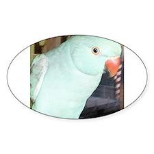 Indian Ringneck Parakeet Decal