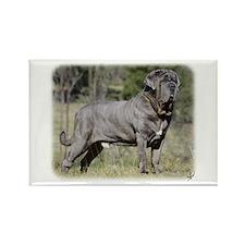 Neapolitan Mastiff AA021D-045 Rectangle Magnet