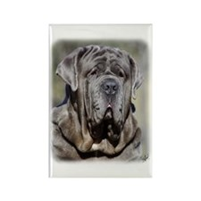 Neapolitan Mastiff AA021D-048 Rectangle Magnet (10