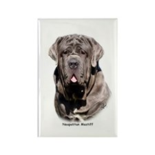 Neapolitan Mastiff 9Y393D-053 Rectangle Magnet (10