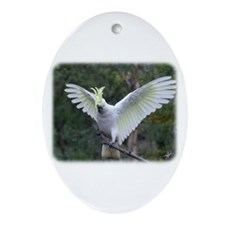 Sulphur Crested Cockatoo 9Y326D-007 Ornament (Oval