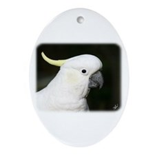 Sulphur Crested Cockatoo 9Y336D-015 Ornament (Oval