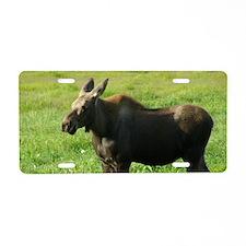 Cow Moose #01 Aluminum License Plate