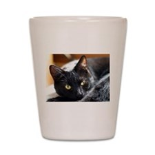 Sleek Black Cat Shot Glass