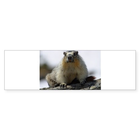 Grumpy Groundhog Sticker (Bumper 50 pk)