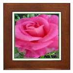 First Rose on Deck Framed Tile