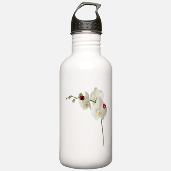 Lady Bug Orchid Water Bottle