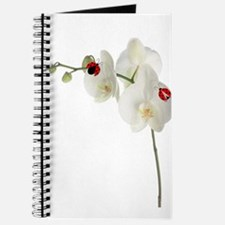 Lady Bug Orchid Journal