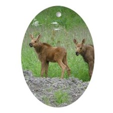 Twin Calves #01 Ornament (Oval)
