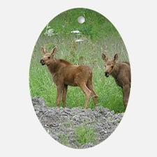 Twin Calves #01 Ornament (Oval)