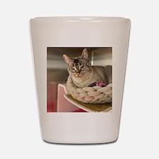 Peace-Love-Bully Pink Mug