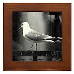 seagulls01 Framed Tile