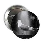 seagulls01 2.25