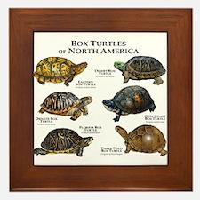 Box Turtles of North America Framed Tile