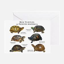 Box Turtles of North America Greeting Card