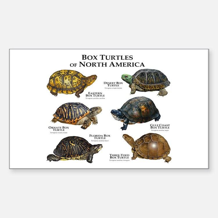 Box Turtles of North America Sticker (Rectangle)