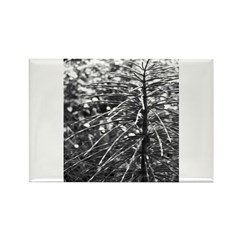 Branches, Black and White Rectangle Magnet (10 pac