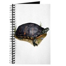 Florida Red-Bellied Turtle Journal