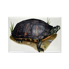 Florida Red-Bellied Turtle Rectangle Magnet