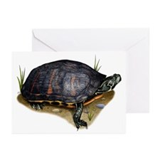 Florida Red-Bellied Turtle Greeting Cards (Pk of 2