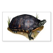 Florida Red-Bellied Turtle Decal
