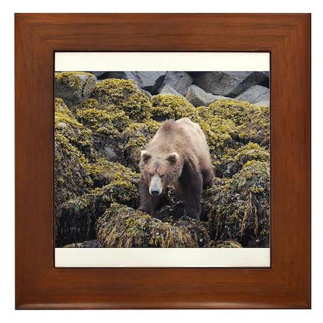 Bear on the Prowl Framed Tile