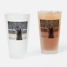 Turkey Face Drinking Glass