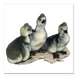 Tufted Toulouse Goslings Square Car Magnet 3""