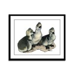 Tufted Toulouse Goslings Framed Panel Print
