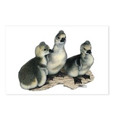 Tufted Toulouse Goslings Postcards (Package of 8)