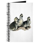 Tufted Toulouse Goslings Journal