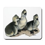 Tufted Toulouse Goslings Mousepad
