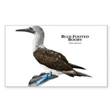 Blue-Footed Booby Decal