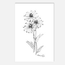 Black Eyed Susan Postcards (Package of 8)