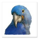 Hyacinth Macaw Square Car Magnet 3