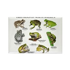 Tree Frogs of North America Rectangle Magnet