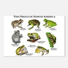 Tree Frogs of North America Postcards (Package of