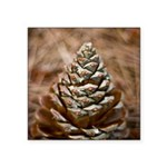 baby pinecones notecards.png Square Sticker 3