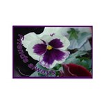 Pansies, Friends Always Rectangle Magnet (100 pack
