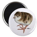 "Bourbon Red Poult 2.25"" Magnet (100 pack)"