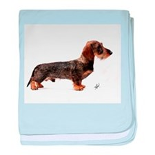Miniature Wire Haired Dachshund 9Y817D-046 baby bl