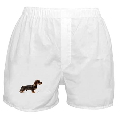 Miniature Wire Haired Dachshund 9Y817D-046 Boxer S