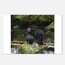 Alaska Black Bears Postcards (Package of 8)