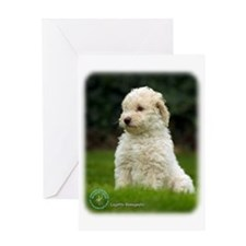 Lagotto Romagnollo 8T21D-10 Greeting Card