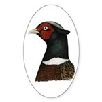 Ringneck Rooster Head Sticker (Oval 10 pk)