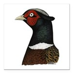 "Ringneck Rooster Head Square Car Magnet 3"" x"