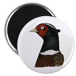 """Ringneck Rooster Head 2.25"""" Magnet (100 pack)"""